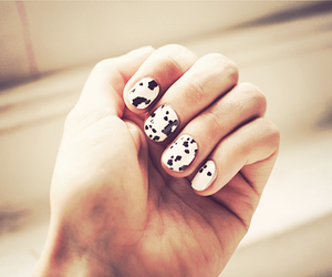 nails, dalmation, and nail polish image