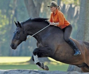 beautiful, dressage, and girl image