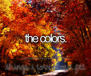 fall, colors, and autumn image