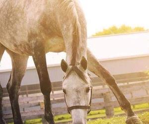 beautiful, horse, and jumping image
