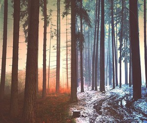 forest, grunge, and trees image
