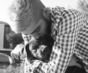 zayn malik, zayn, and dog image