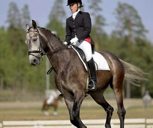 beautiful, girl, and dressage image