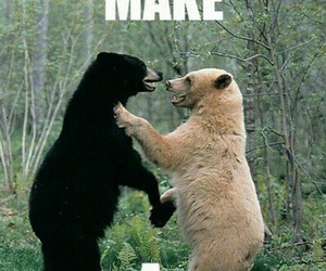 black bear, couple, and white bear image