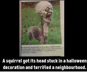 Halloween, funny, and squirrel image