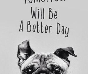 dog, quotes, and wallpaper image
