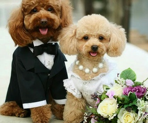 two dogs married image