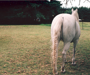 horse and braid image