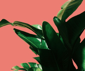 plants and aesthetic image