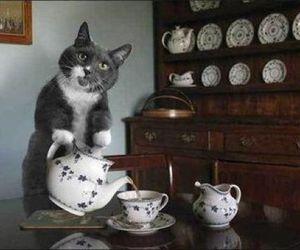 cat, tea, and animal image