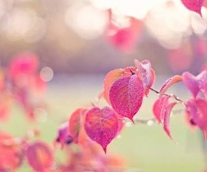 leaves, autumn, and pink image