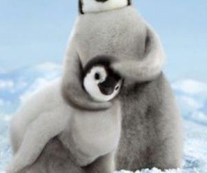 penguin and animal image
