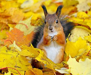 squirrel, autumn, and animal image
