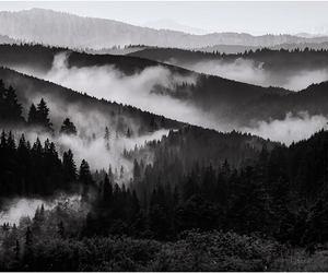 black and white, dark, and fog image