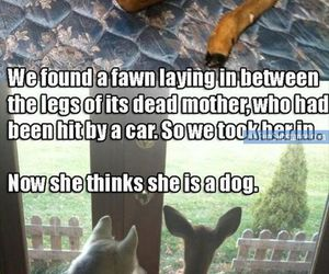 deer, pet, and quotes image