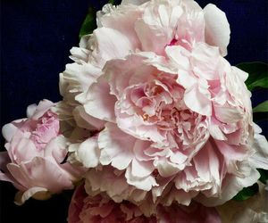 flower, peonies, and rose image