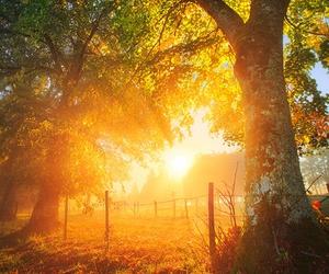 tree, autumn, and sunset image