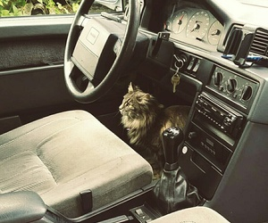 animals, summer, and car image