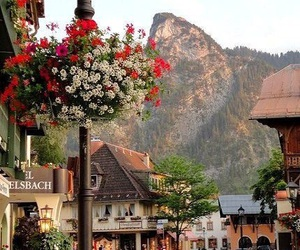 flowers, germany, and place image