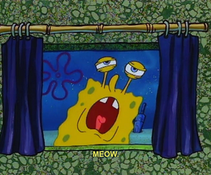 meow, spongebob, and cat image