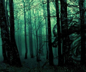forest, dark, and black image