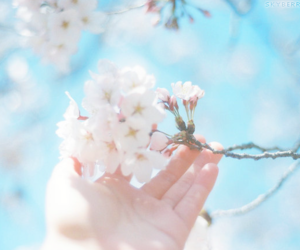 flowers, pale, and pastels image