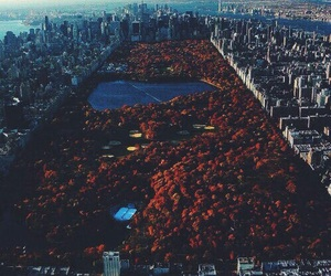 new york, city, and Central Park image