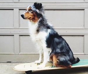 dog, cute, and skateboard image