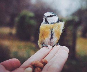 bird, nature, and cute image