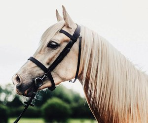 horse and animal image