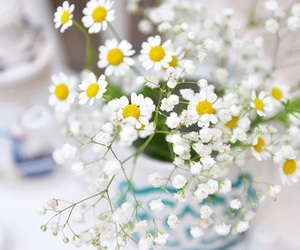 flowers, tenderness, and white image