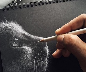 art, drawing, and cat image