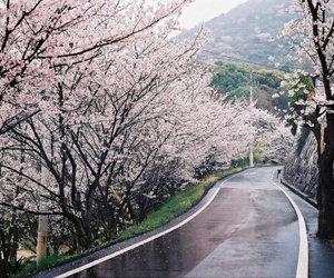 beautiful, cherry blossom, and indie image