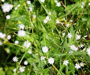 finland, flowers, and green image