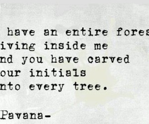 forest, quote, and love image