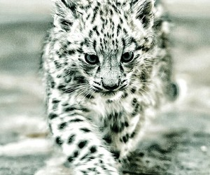 animal, cute, and baby image