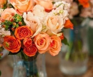 macro photo, flowers, and roses image