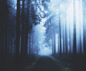 forest, blue, and photography image
