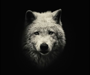 tumblr, wolf, and beautiful image