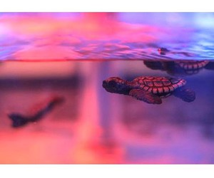 ocean and turtle image