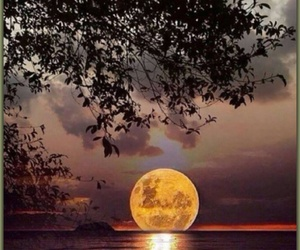 moon, nature, and night image