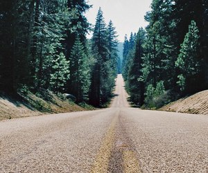 road, nature, and trees image
