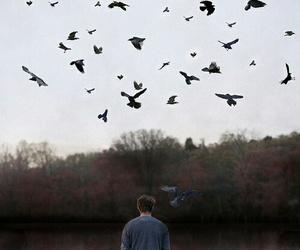 amazing, birds, and one man image