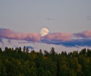 moon, forest, and nature image