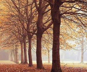 autumn, forest, and leaf image