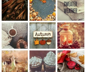 autumn, cold days, and fall image