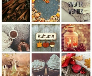 autumn, rainy day, and cold days image