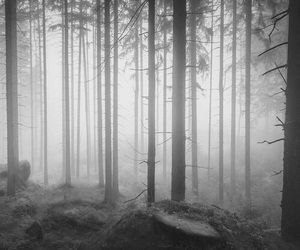 beautiful, mist, and forest image