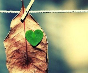 love, heart, and leaves image