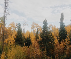 autumn, cold mountain, and forest image